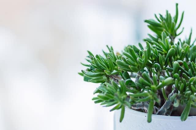 20180425-plant